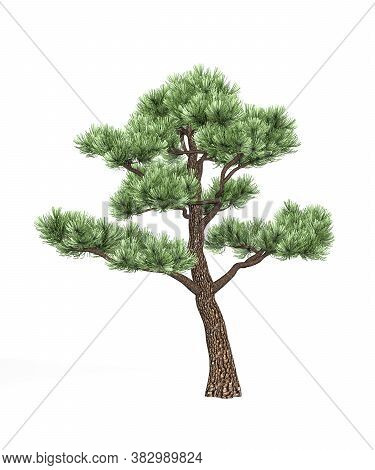 Bonsai Pine Isolated On White Background - 3d Render