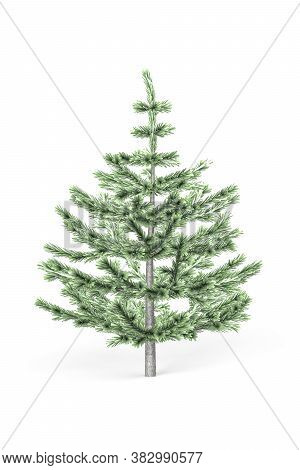 Young Fir Tree Isolated On A White Background - 3d Render