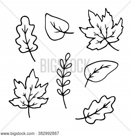 Autumn Leaves Hand Drawn Doodle Set. Maple Oak Birch Sketch Outline For Postcard Poster Pattern. Sto
