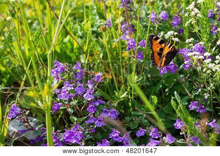 butterfly in meadow