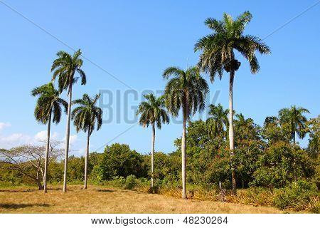 Nature In Cuba