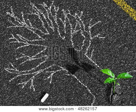 tree on asphalt road chalk contour and sprout growing concept