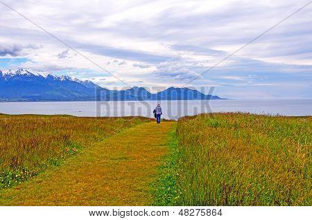 Morning Walk On A Coastal Meadow