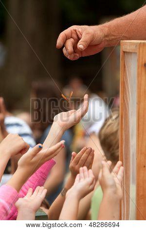 Alcance de mãos juvenil para uma borboleta sendo lançada