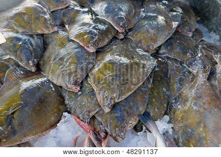 Flatfish On The Stand