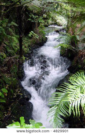 Waterfall At Te Wairoa - Near Rotorua New Zealand.