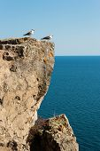 Two seagulls standing on a vertical cliff over the sea poster