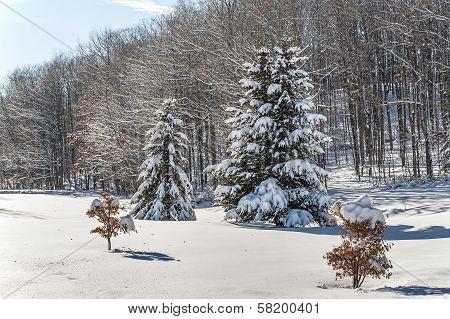 Winter Coating