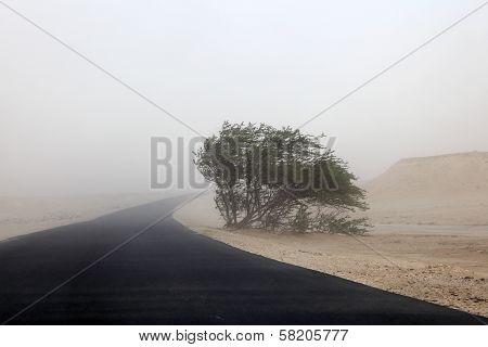 Sandstorm In The Desert Of Qatar