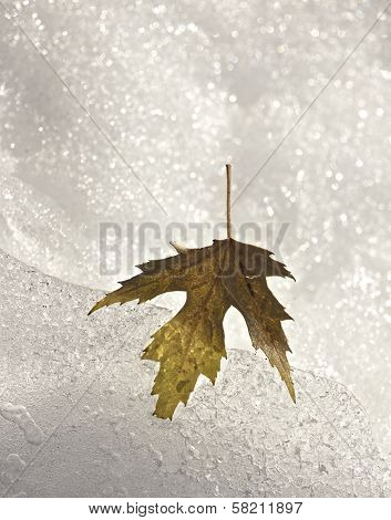 Maple Leaf Frozen in Ice