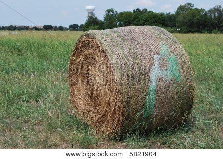 Fall Hay