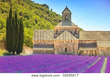 Abbey of Senanque and blooming rows lavender flowers. Gordes Luberon Vaucluse Provence France Europe. poster