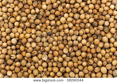 Many Small Dried Coriander Seed. Food Spicery Backgrounds