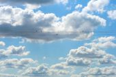 This is a shot of beautiful blue sky with white clouds, and birds on the wire,  like nice backgrounds. poster
