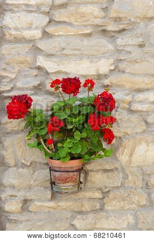 Flowers In A Pot On A Stone Wall In Italy