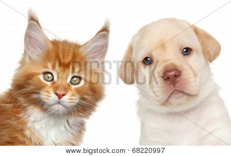 Kitten And Puppy. Close-up Portrait