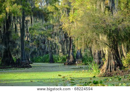 Swamp Scenic