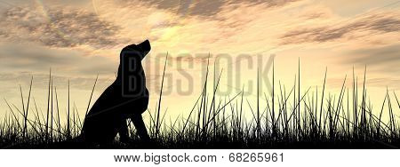 Concept or conceptual young beautiful black cute dog silhouette in grass or meadow over a sky at sunset landscape background banner