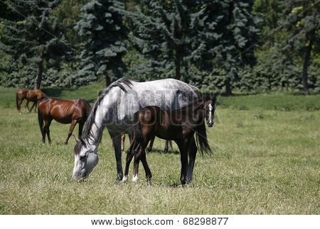 Horses grazing in pasture.