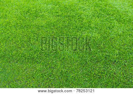 greensward football field background Green field