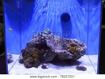 Coral Tank