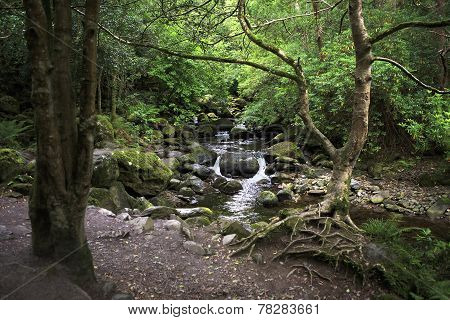 Relict forest in the Torc Mountain.