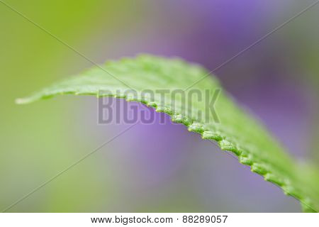 Plants, leaf in a garden during spring and summer.