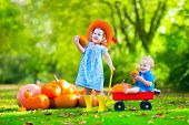Kids playing at pumpkin patch at Halloween. Children play and pick pumpkins on a farm. Toddler girl and baby boy in a wheel barrow harvest vegetables in autumn. Fall outdoor fun for family with child poster