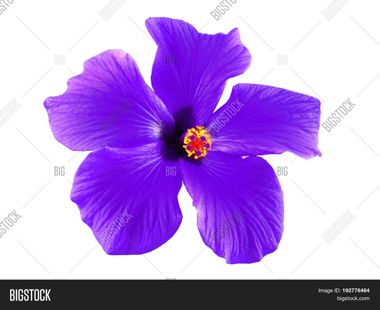Beautiful Purple Image Photo Free Trial Bigstock