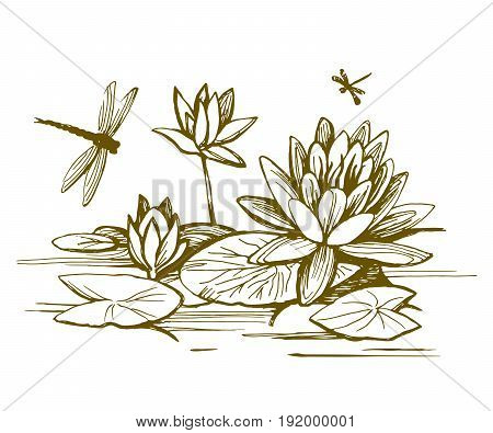 Flowers of water lilies and leaves on the water surface. Dragonflies fly over plants. Vector sketch.
