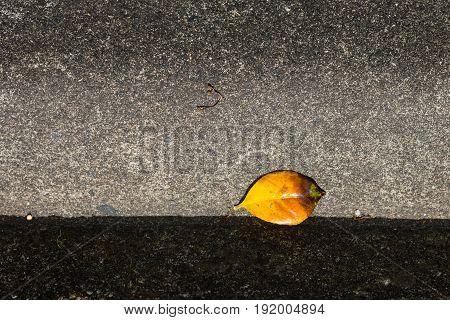 Yellow Leaf On The Sidewalk