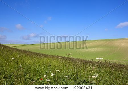 Wildflowers And Pea Crop