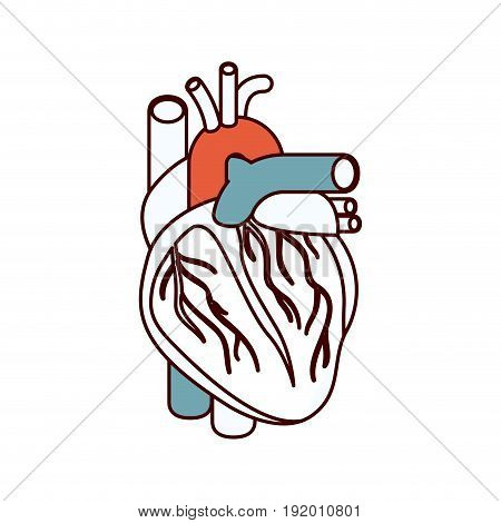 color sections silhouette heart system human body vector illustration