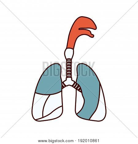 color sections silhouette respiratory system with windpipe vector illustration