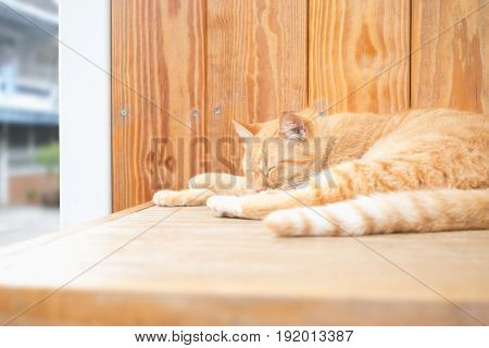 Cuddly orange ginger cat sleeping on wood.The guard of house in life domestic