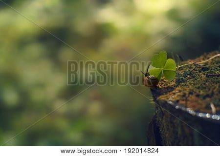 A Small Snail Crawls Along The Stump In The Direction Of The Green Leaf In The Morning Forest