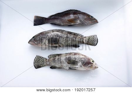 top shot of fish
