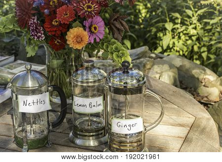 A trio of fresh herbal or medicinal teas in tea presses: nettles lemon balm and ginger on a table outside in the shade