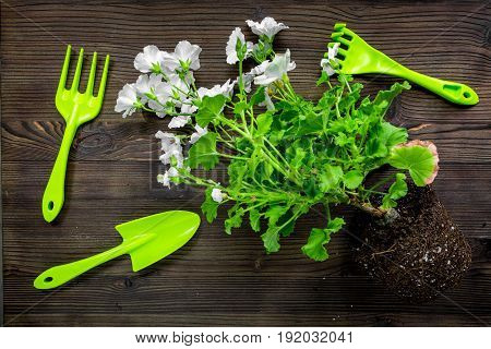 rake, trowel, ground and greenary for gardening on wooden desk background top view