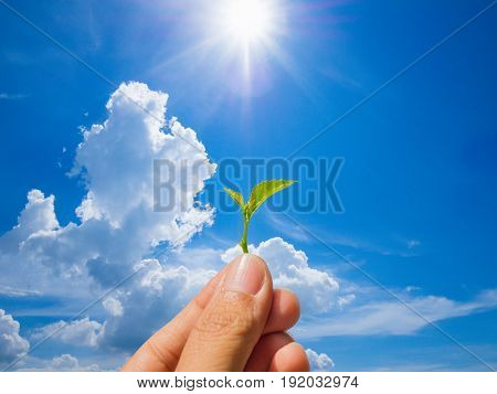 Growing a plant. Hands holding and nurturing tree growing on fertile soil / nurturing baby plant / protect nature / Agriculture isolate on white background