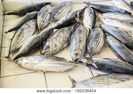 Tuna Fish For Sale At Fish Market In Male,maldives