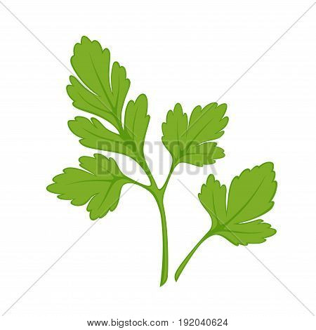 Fresh green parsley isolated on white closeup vector illustration. Greenish summer plant with thing stem and many leaves with nice smell for adding in salads and soups and making them tasty
