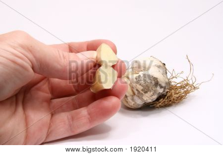Fresh Cut Garlic With Buds In Background On White