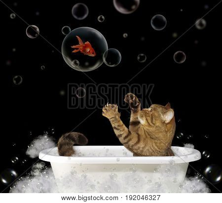 The cat is taking a bath. A gold fish is inside a bubble.