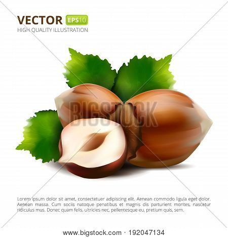 Vector Hazelnuts With Leaves Isolated On White Background.