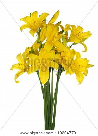 Bouquet of daylily yellow isolated on white background.