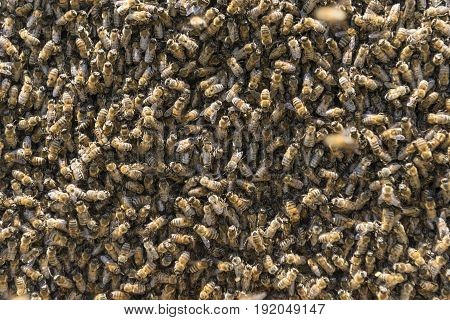 crowded bee colony populations & beekeeping sector