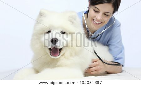 smiling Veterinarian examining dog on table in vet clinic