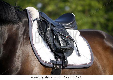Brand new show jumper leather saddle on horseback against green natural background