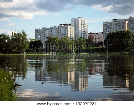 Duck with ducklings swimming in the pond in the Park. Beautiful landscape high-rise buildings summer